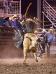 bull riding at phillipsburg rodeo 2018